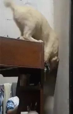 animals wallpapers Frank was scared of jumping from high places so. Cute Animal Videos, Funny Animal Pictures, Cute Funny Animals, Cute Baby Animals, Animals And Pets, Cute Cats, Funny Cats, Funny Images, Gato Gif