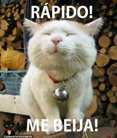 www.catmaniacos.com.br