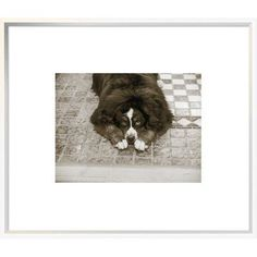 """East Urban Home 'I Am Sorry' Photographic Print Format: Collins Black Framed, Matte Color: Bright White, Size: 18"""" H x 24"""" W"""