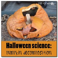 Learn about decomposition by allowing your jack-o-lantern to rot in the yard and have your kids observe the process - Gift of Curiosity