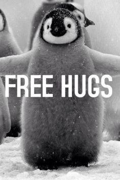 Free Hugs <3 #penguin