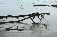 """Praia de Bertioga (14), pertencente ao ensaio fotográfico """"Praia de Bertioga"""". Capturada com uma Nikon Coolpix L810.   Fevereiro de 2017. #photo #photography #art #artpop #Brasil"""