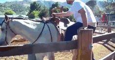 I'm a cowboy! - 9GAG