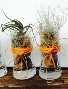 UK FREE SHIPPING air plant terrariumairplant by BeLivingArt