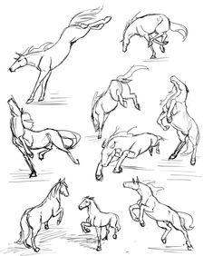 More horse studies by RasnovStables on deviantART