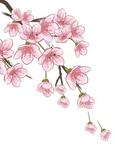 Choose from 60 top Sakura stock illustrations from iStock. Find high-quality royalty-free vector images that you won't find anywhere else. Art And Illustration, Fabric Painting, Painting & Drawing, Watercolor Flowers, Watercolor Paintings, Cherry Blossom Art, Cherry Blossom Watercolor, Cherry Blossom Vector, Flower Drawing Tutorials