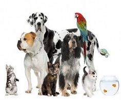 Tips on Saving Money on Pet Supplies---> http://www.womansday.com/life/saving-money/money-saving-advice-for-pet-owners-86351