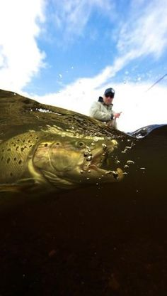 #salmon #fishing #underwater. Album here: http://drowningworms.com/amazing-underwater-shots/