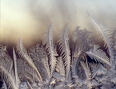 Frost on Window - feathers