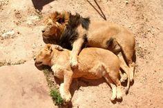 Cuteness overload : ces animaux bronzent tout doux au soleil. #CutenessOverload