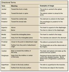 position and directional terms on the anatomy - Google Search