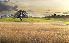 Honey Young - widescreen wallpaper landscape - 1680x1050 px