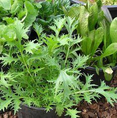 Top 10 vegetables to grow in pots