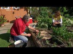 Spinat und Feldsalat säen - YouTube