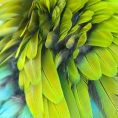 Macaw Feathers by Henry Domke