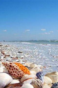 Shell Beach Sanibel Island, Florida,USA just went to captiva island and it was beautiful. Shell Beach, Ocean Beach, Beach Bum, Sanibel Beach, Best Honeymoon Spots, Foto Top, Captiva Island, Sanibel Island Shells, Florida Usa