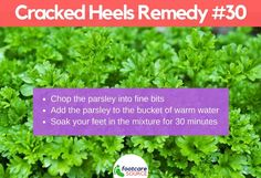 Cracked feet are unsightly and painful. People suffering from cracked feet or heel fissures usually hide their feet in stuffy shoes. Aside from the physical embarrassment of the condition, most people who have dry feet Cracked Feet Remedies, Foot Remedies, Dry Cracked Heels, Natural Moisturizer, Neem Oil, Tea Tree Oil, Feet Care, Shea Butter, Health And Beauty