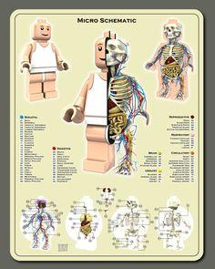 Anatomie des Legos et des bonbons nounours