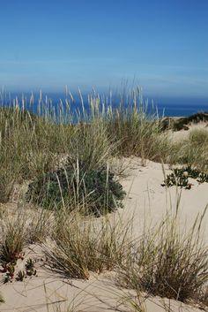 Portugal - Areias do Seixo | Stroll through the dunes taking in Nature, the LAND and the SEA… a true awakening of all the senses… http://www.areiasdoseixo.com/