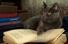 Un día, un gato...