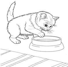 Pretty Image of Kittens Coloring Pages . Kittens Coloring Pages Javanese Kitten Coloring Page Free Printable Coloring Pages Blank Coloring Pages, Puppy Coloring Pages, Online Coloring Pages, Cartoon Coloring Pages, Printable Coloring Pages, Coloring Books, Free Coloring, Coloring Sheets, Kitten Drawing