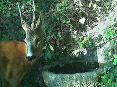 Wild Wood en Provence: deer marten cat and birds 30 July, 30 September, Provence, Giraffe, Deer, Birds, Cats, Wood, Animals
