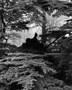 Bill Brandt - Sphinx, Chiswick house gardens, 1944.