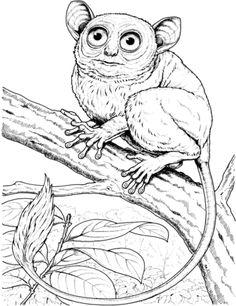 how to draw a tarsier