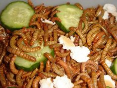 How to Raise Mealworms: 15 Steps - wikiHow