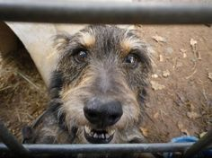 Independent rescuer died and over 45 dogs are now in need of help