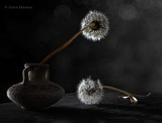 two dandelion by Elena Eremina on 500px