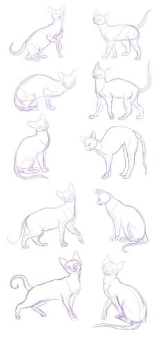 34 New Ideas Drawing Tutorial Cat Sketch Cat Reference, Anatomy Reference, Drawing Reference, Drawing Techniques, Drawing Tips, Drawing Sketches, Cat Drawing Tutorial, Sketching, Drawing Poses