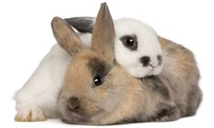 Have you ever wondered why so many people say Rabbit! or Rabbit, Rabbit! on the first day of each month?