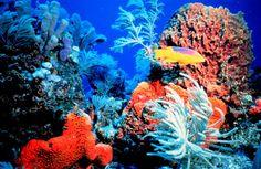 Le Migliori 33 Immagini Su Fondali Marini Del 2016 Pisces