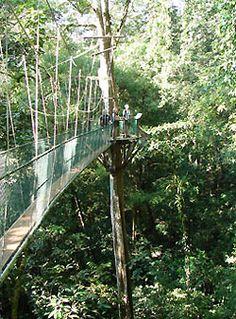 Mulu, Borneo - amazing rainforests