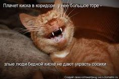 My yawning cat. Funny Shit, Funny Cats, Cat Love, Make You Smile, Cool Photos, Amazing Photos, Dog Cat, Cute Animals, Pets