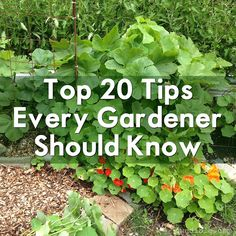 I've handed out a lot of gardening advice in the 4+ years I've been writing here, but some tips are just so timeless I find myself coming back to them over and over. Here are 20 tips I …