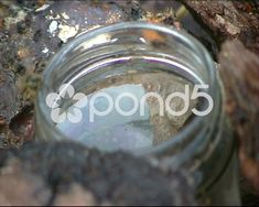 Insects on edge of jar - Stock Footage Fine Art Photo, Photo Art, Stock Video, Stock Footage, Insects, Shots, Jar, House Design, Animals