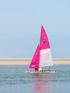 Sailing.....pink sails