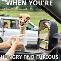 Hungry and Furious Has anyone seen the llama..l