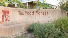 """""""Commercial Dryland Food Forest"""" – Videos :: Geoff Lawton Online """"We recently visited our friends Graham Bell and Annmarie Brookman, who were kind enough to give us a tour of one of the most iconic permaculture sites in Australia. A short, visually-rich 7 minute video that shows what is possible with a bit of planning, work, and time. Winning line from my time with Graham: 'We have so many species here that I can't even keep up…'"""""""