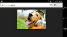 WOW even dogs like itunes!