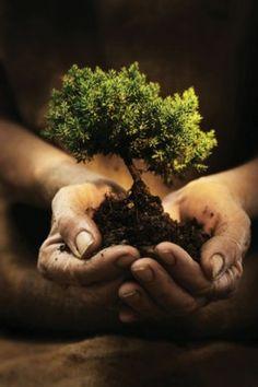 Bonsai Trees For Beginners 🔸🔺🔸🔻🔹Bonsai Trees : More At FOSTERGINGER @ Pinterest 🔴⚫️🔷🔹🔸🔺