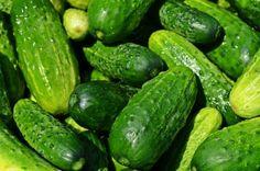 Cucumber (Cucumis sativus) Health Benefits | Brett Elliott's Ultimate Herbal Detox