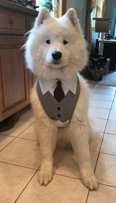 Dog Wedding Outfits, Dog Wedding Attire, Wedding Tuxedos, Tuxedo Wedding, Wedding Poses, Wedding Ideas, Animals And Pets, Cute Animals, Dog Tuxedo