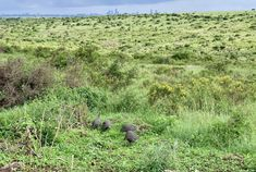 Experience wildlife while interacting and observing them of how they contributed in maintaining balance in our ecosystem. Timon And Pumbaa, Simba And Nala, Kenya Africa, Dark Night, Business Travel, Safari, Wildlife, Scene, Tours