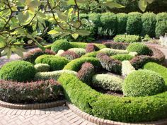 Beautiful knot garden - the maroon is probably Berberis thunbergii 'Atropurpurea Nana'