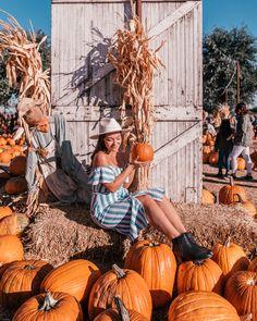 Pumpkin Patch Dallas, Best Pumpkin Patches, Fall Halloween, Halloween Ideas, Farm Store, Farm Fun, Pumpkin Farm, Autumn Activities, Photoshoot Ideas