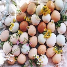 Future Farms, Farm Photography, Spring Aesthetic, Chickens Backyard, Farm Life, Country Life, Spring Time, Spring Song, Happy Easter
