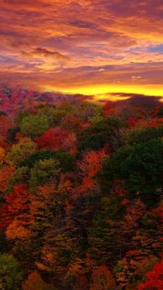 Autumn Forest - 18 Fascinating Photos of Places in the Amazing Autumn